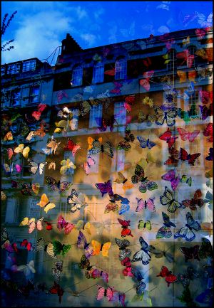 Butterfly Wall-web.jpg