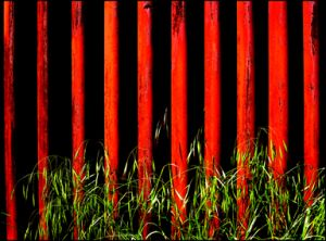 Red Fence-web.jpg
